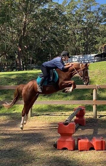 CHILLI - Stock Horse Mare