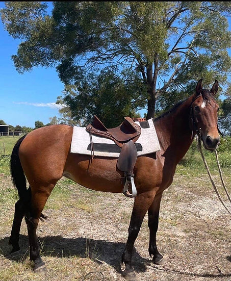 RIVER - Brumby Mare