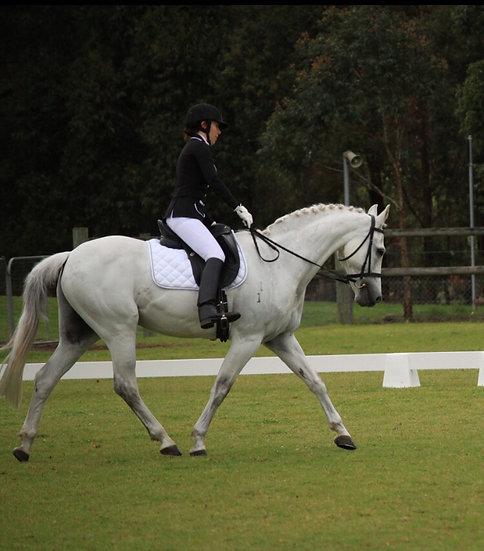 PINKIE - Australian Riding Pony Gelding