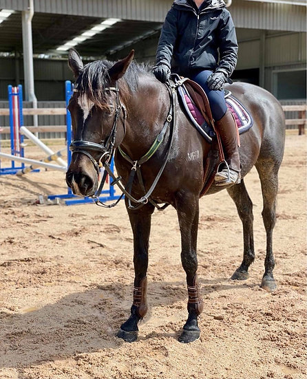 INFIDEL - THOROUGHBRED MARE