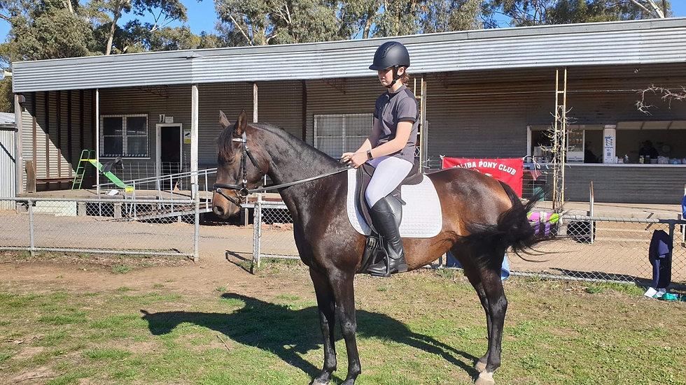 DIVA - Riding Pony Mare