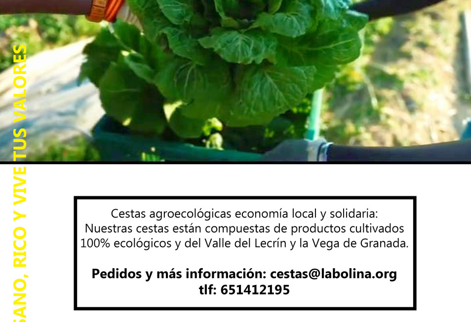 CESTAS_ECOLÓGICAS_LA_BOLINACEST