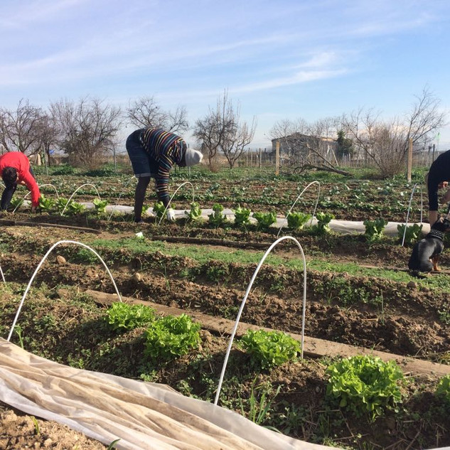 Learning permaculture and agroecology