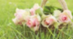 roses-2200770_1920.jpg