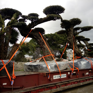 Truck with trees 2.jpeg