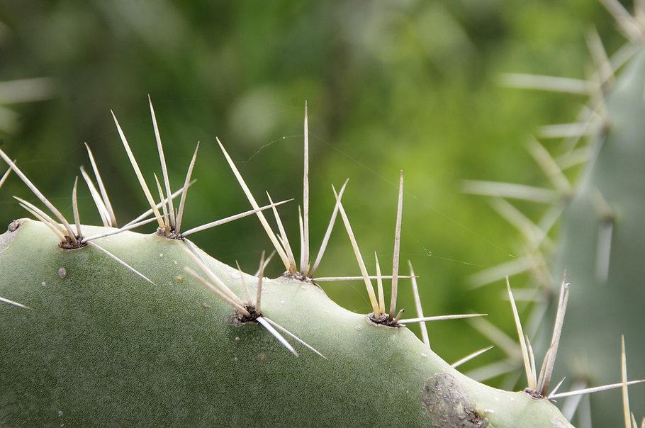 espinas-de-cactus.jpg