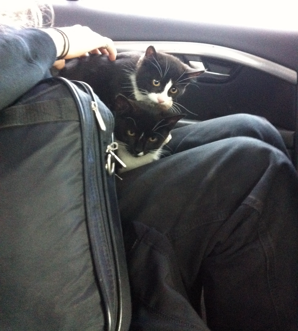 Kittens. Really.