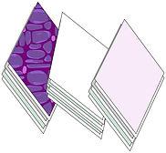 5 diamonds.jpg