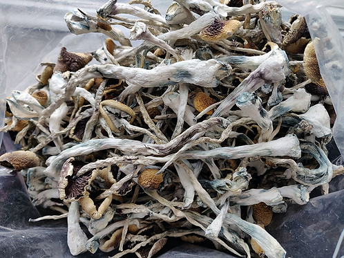 Psychedelic Mushrooms Costa Rican