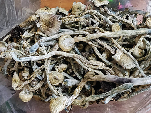 Psychedelic Mushrooms Great White Monster
