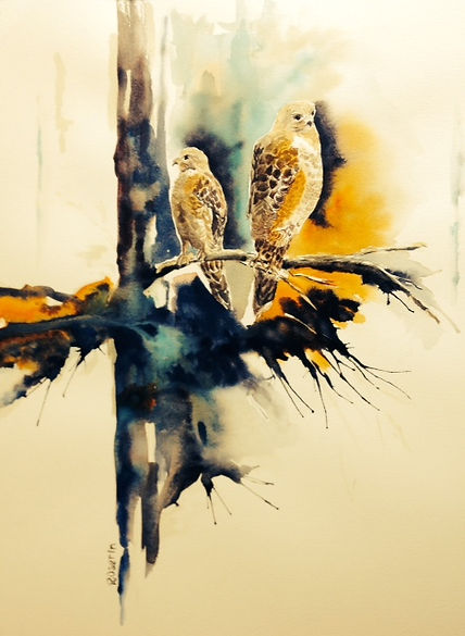 250  Red Shouldered Hawks  wc SOLD16x20.