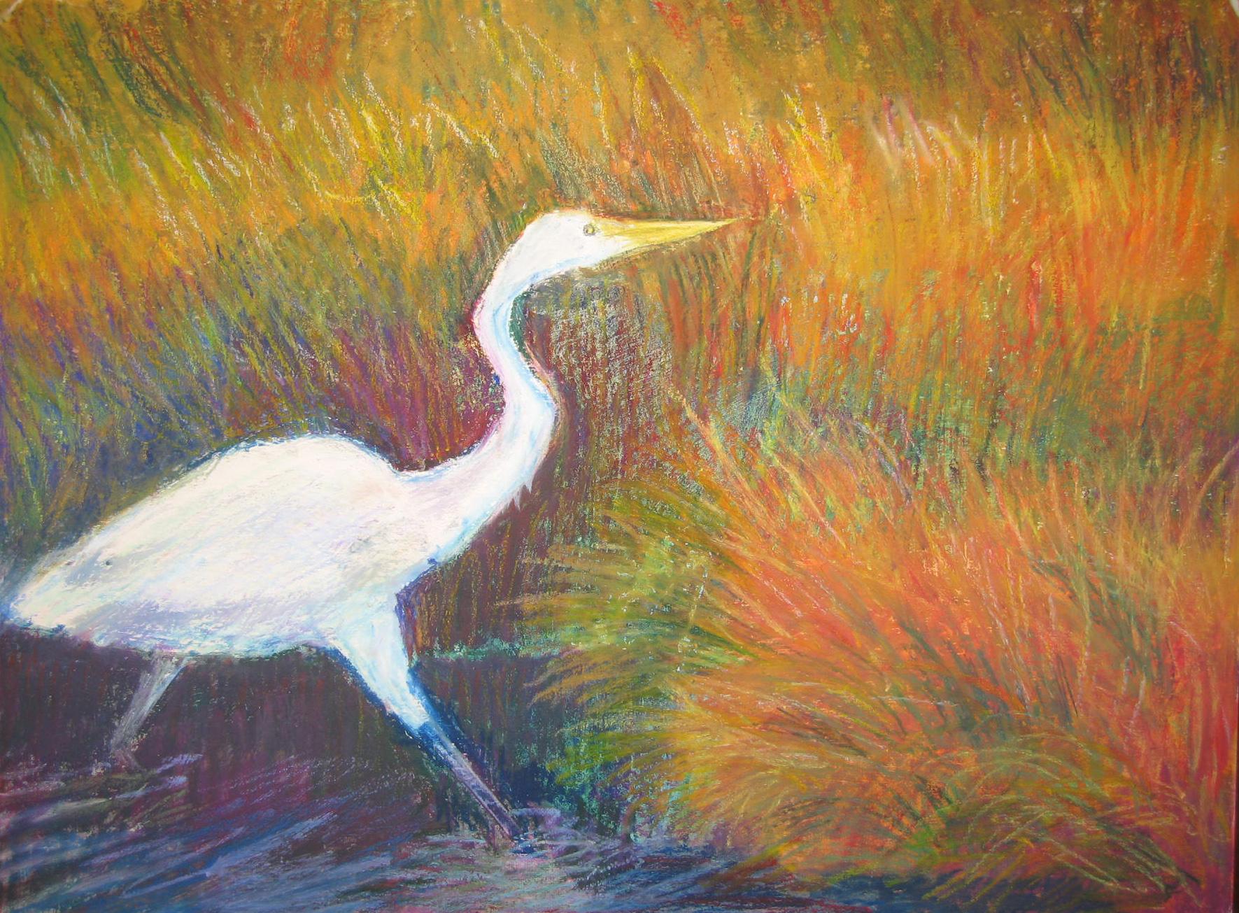 Blackwater Egret