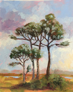 Scrub Pines