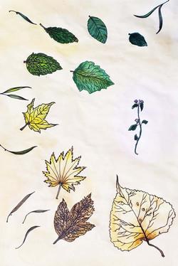 Palo_Sotiria_leaves