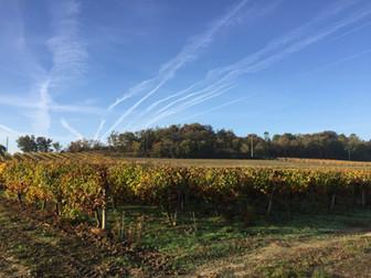 Coudert vineyards