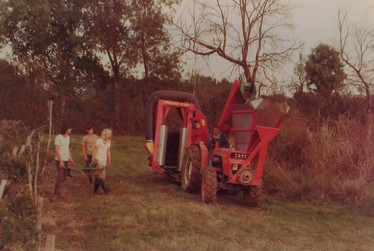 Harvest 1979