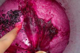 Vinification Bordeaux