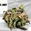 Thumbnail: CANADIAN CG634 HELMET SCRIM