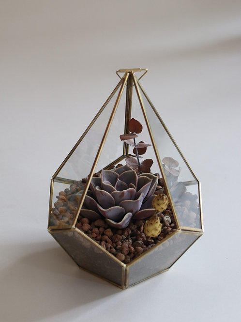 Piramit Fanus - Sukulent