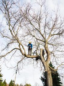 Cam in a tree.jpg