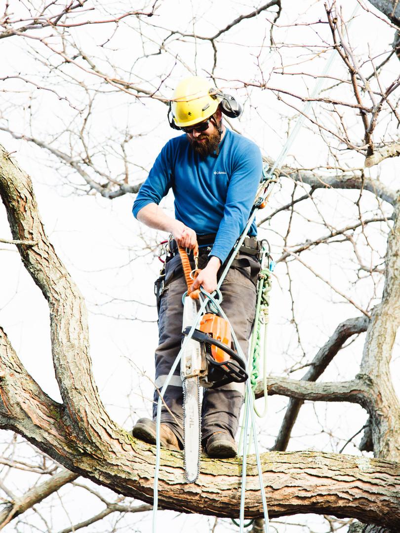 Neighbours tree prune
