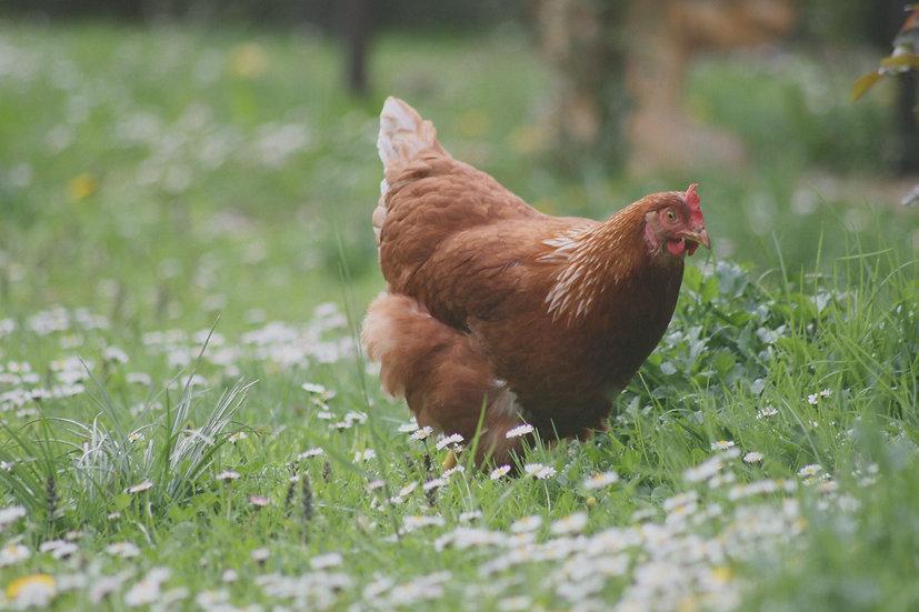 4 x Chicken Thighs
