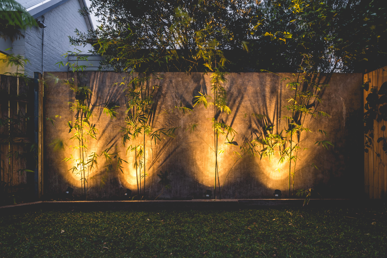 Zen Bamboo - Justin Popp-30
