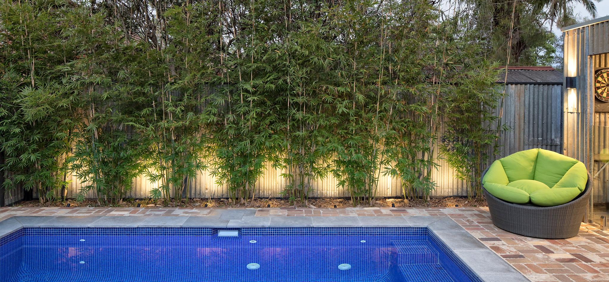 bamboo-crop
