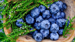blueberry-antioxidants-containing-super-