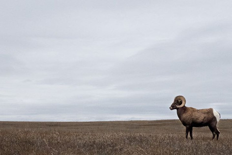 Banlands, South Dakota