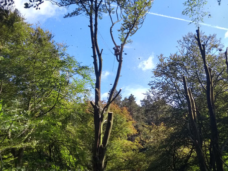 Beech Monoliths at Hardcastle Crags