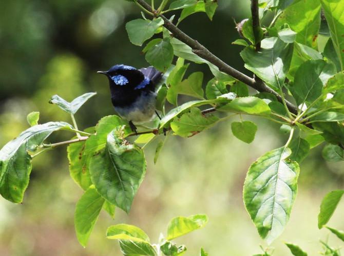 Wings on King – Spring Bird Survey