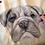 Thumbnail: Framed Watercolour Hand Painted Pet Portrait.