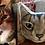 Thumbnail: Custom Cat Cushion