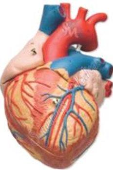 Corazón gigante modelo MACOGV02