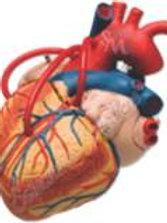Corazón mediano modelo MACOMV01