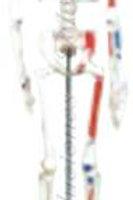 Esqueleto clásico con color modelo DCVQ7022