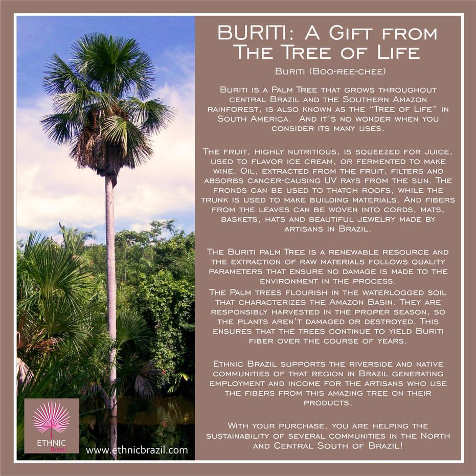 Buriti: The tree of life