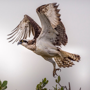 Sénégal oiseaux-