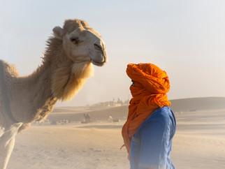 Le chamelier et son chameau