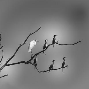 oiseaux_perchés_DSC3713.jpg