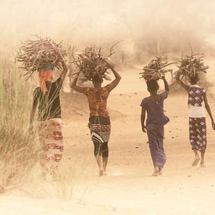 Sénégal Porteuses de fagots de bois
