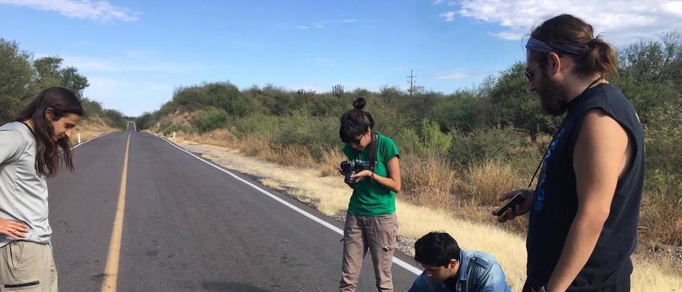 Monitoreo de Fauna Silvestre