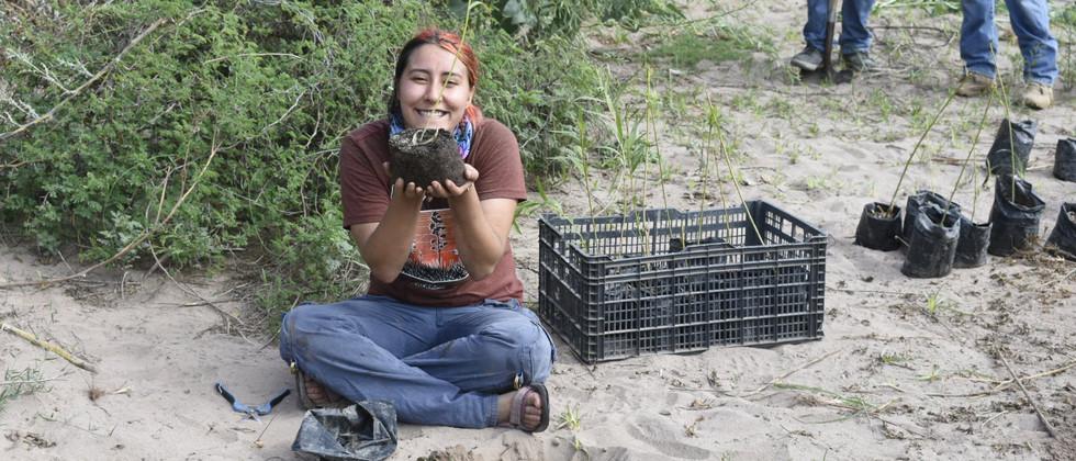 Reforestación de Hábitat del Jaguar en el Río Bavispe