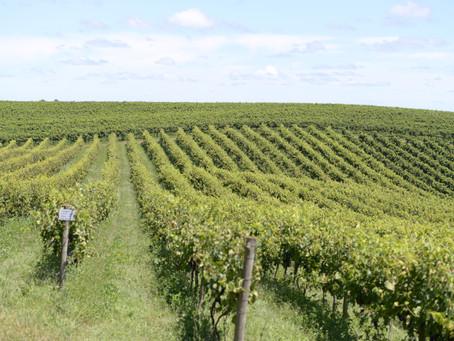 Conheça o vinho gaúcho premiado na França que custa R$ 35