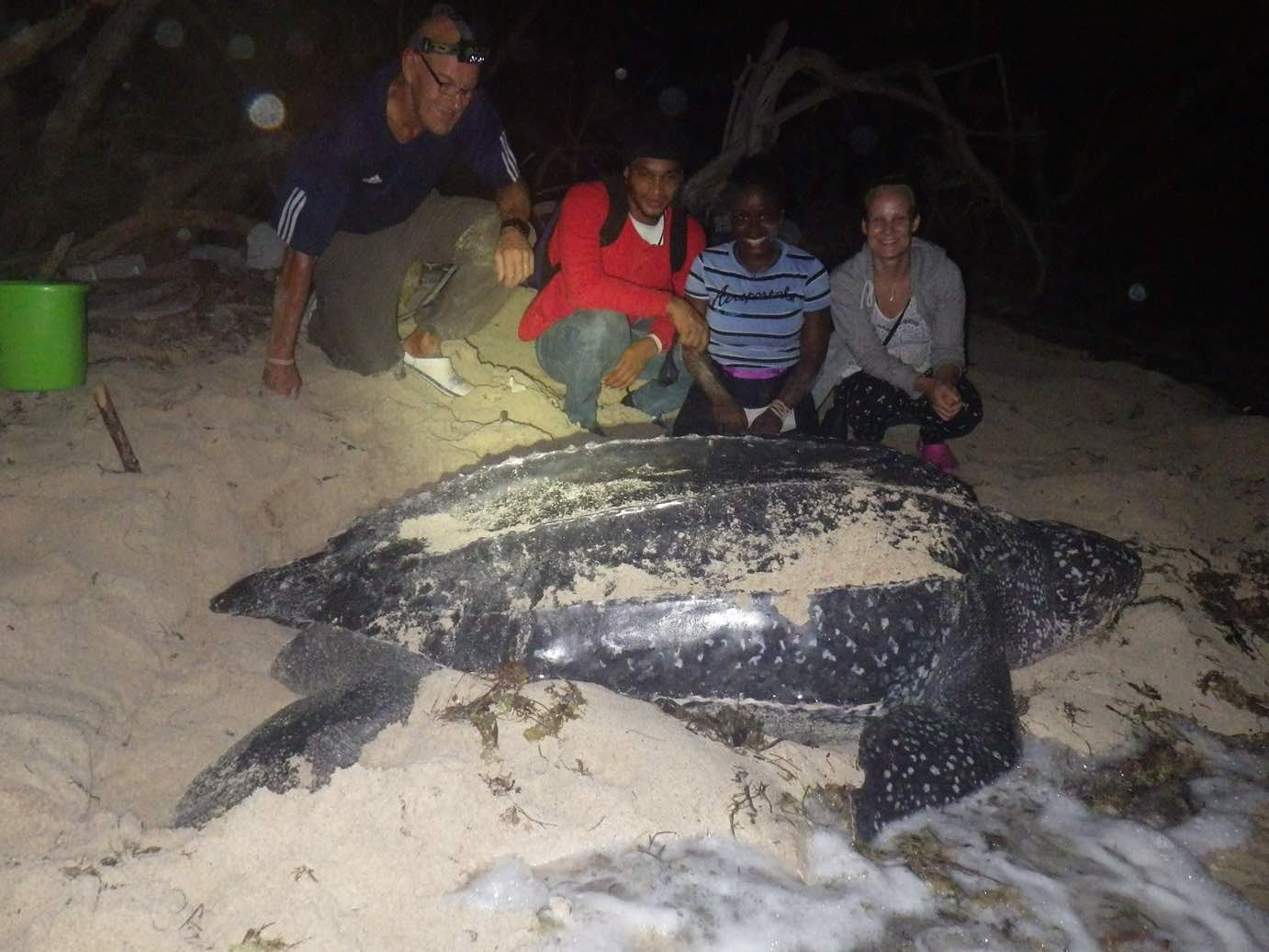 Guides and vols with leatherback