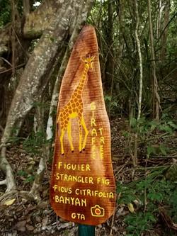 The Giraffe Tree is a tucked away surpri