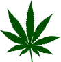 cannabis_PNG59.png