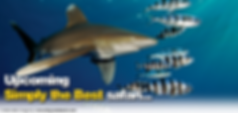 Bespoke Scuba Diving - Dagenham Essex - Red Sea Trip With Blue O Two - Oceanic White Tip