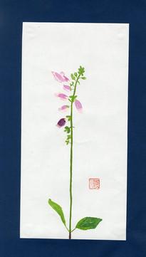 ジギタリス 恵子594.jpg